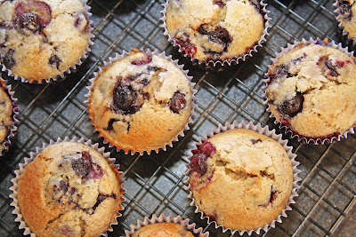 Blueberry Polenta Cupcakes